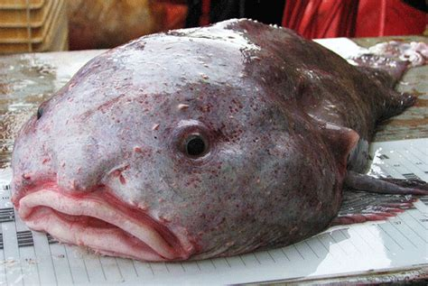 The Ugliest Animals on Earth (and Underwater…and in the Air)