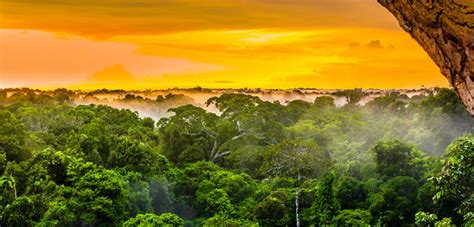 """Amazon Rainforest Could Reach """"Irreversible Tipping Point"""